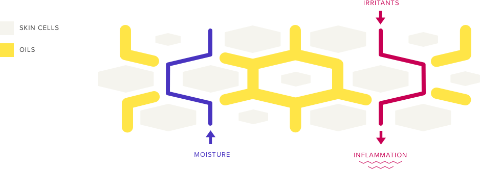 skin-cells